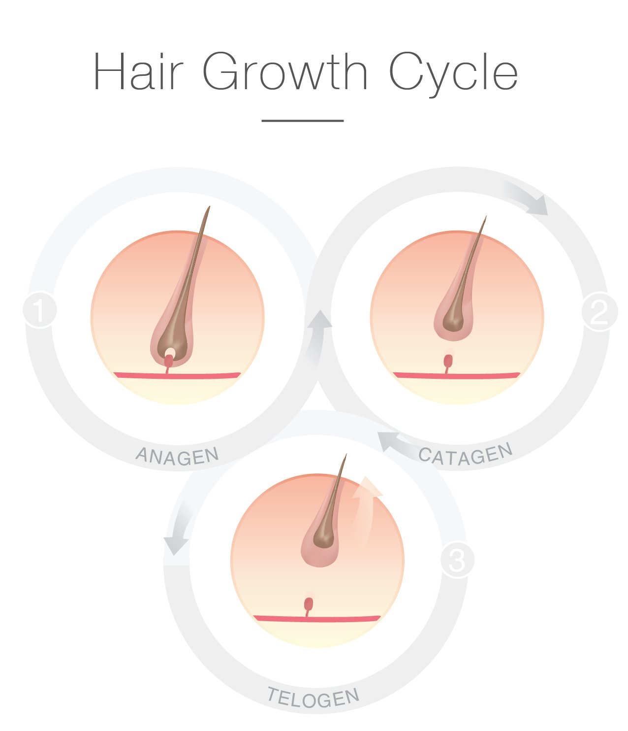 Hair Cycle