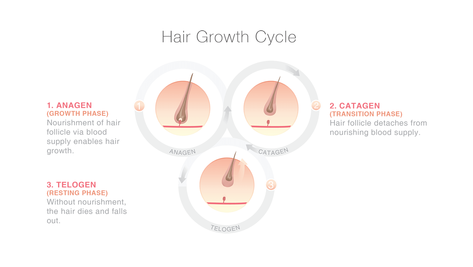 Supplements for hair loss - Hair Cycle