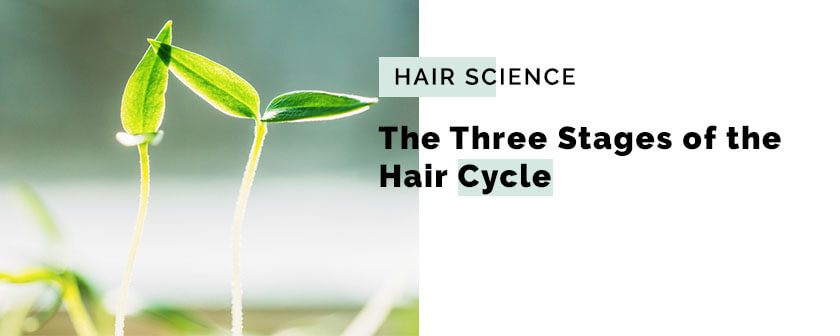 The Three Stages of the Hair Cycle